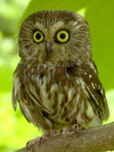 if my first reaction to you is an owl's, then we probably have no reason to meet up.